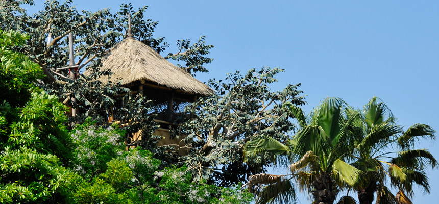 gambar Swiss Family Treehouse2