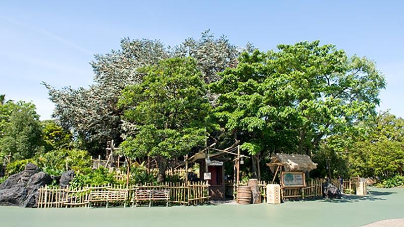 大きなベンガルボダイジュの木の上で♪のイメージ