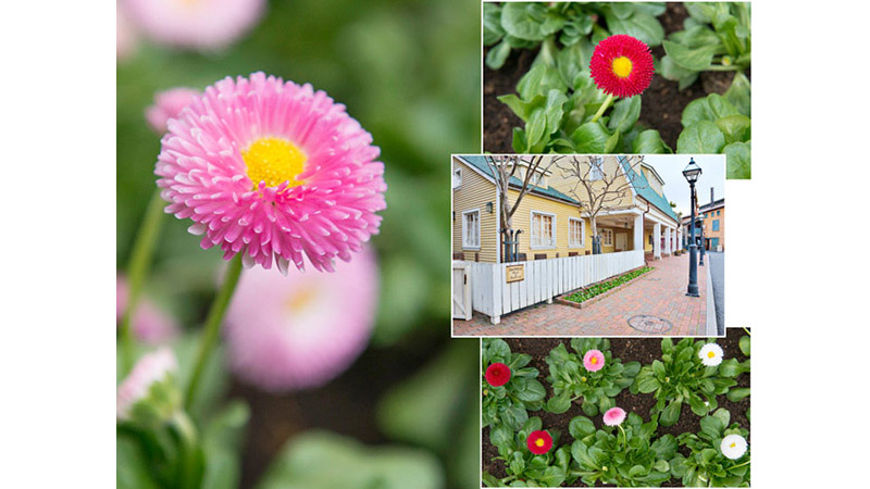 【花と緑の散策】のイメージ