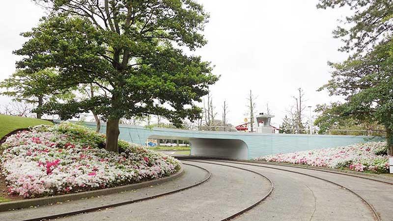 【花と緑の散策 特別編】「グランドサーキット・レースウェイ」で見ることができる植物特集!のイメージ