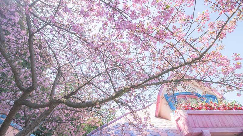 東京ディズニーリゾートの桜をご紹介♪~東京ディズニーランド編~のイメージ