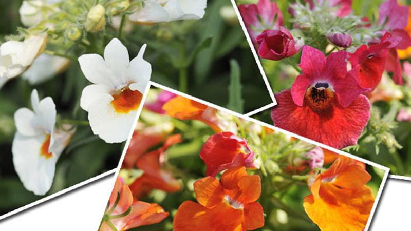 「ミッキーとダッフィーのスプリングヴォヤッジ」~パークを彩る植物とともに~Vol.1のイメージ