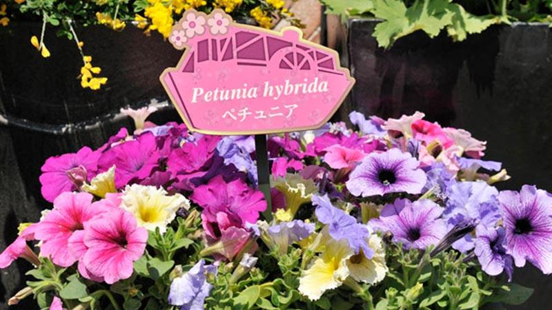 「ミッキーとダッフィーのスプリングヴォヤッジ」~パークを彩る植物とともに~Vol.3のイメージ