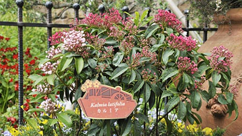 「ミッキーとダッフィーのスプリングヴォヤッジ」~パークを彩る植物とともに~Vol.9のイメージ