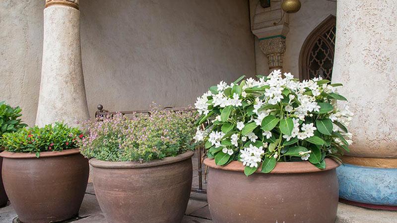 【花と緑の散策】  のイメージ