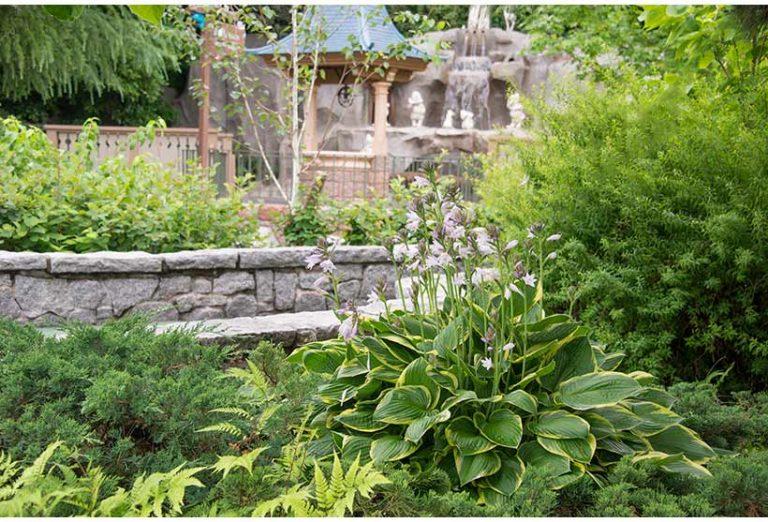 ギボウシ,花と緑の散策,東京ディズニーランドの画像