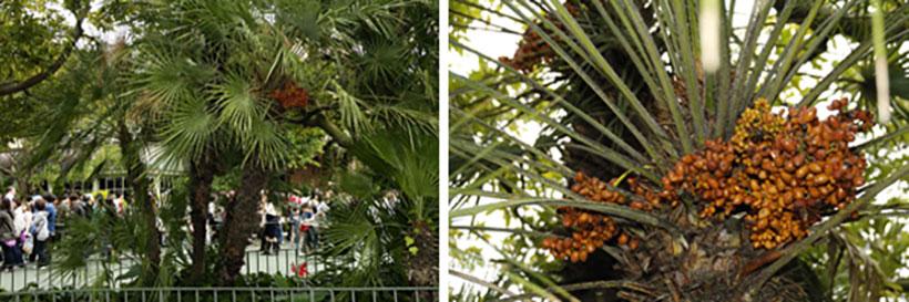 「パークサイドワゴン」付近のチョメロップスの画像