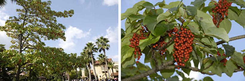 「ジャングルクルーズ」入口付近のイイギリの画像