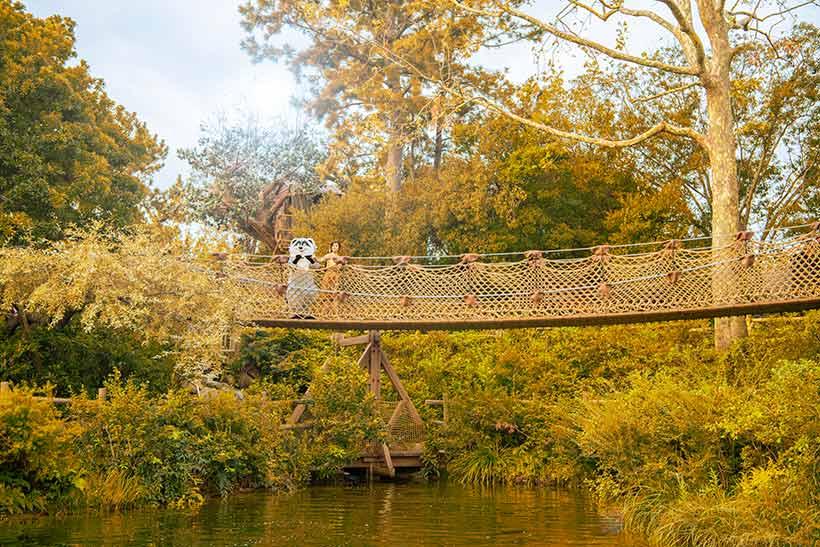 橋から眺めている画像