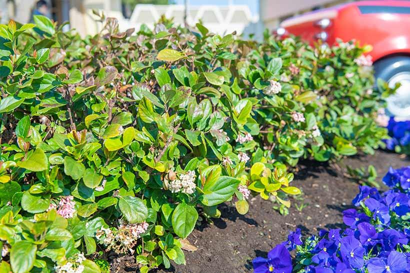 花と緑の散策,東京ディズニーランド,花,癒し,緑,はな,みどり,東京ディズニーリゾート,植物,お散歩,ゴモジュ