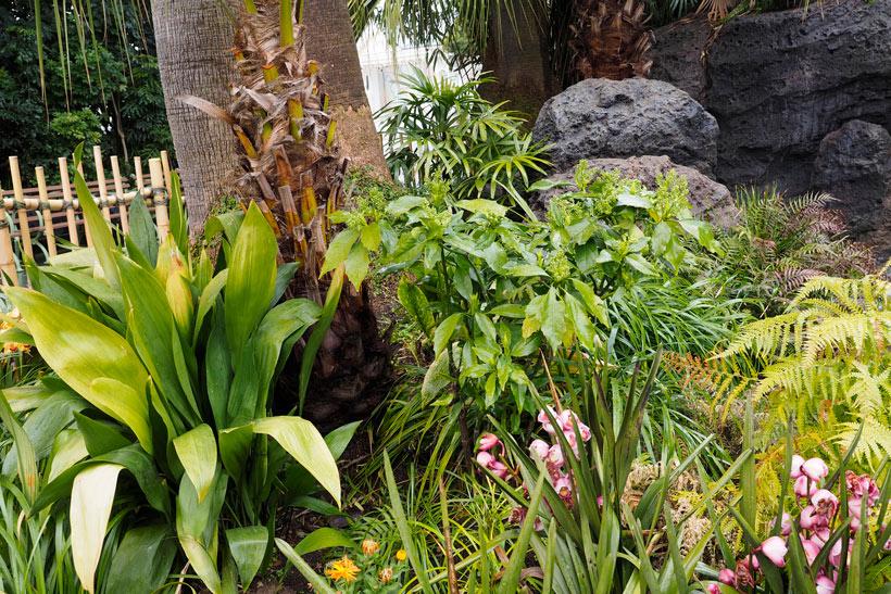 花と緑の散策,東京ディズニーランド,花,癒し,緑,はな,みどり,東京ディズニーリゾート,植物,お散歩,アオキ