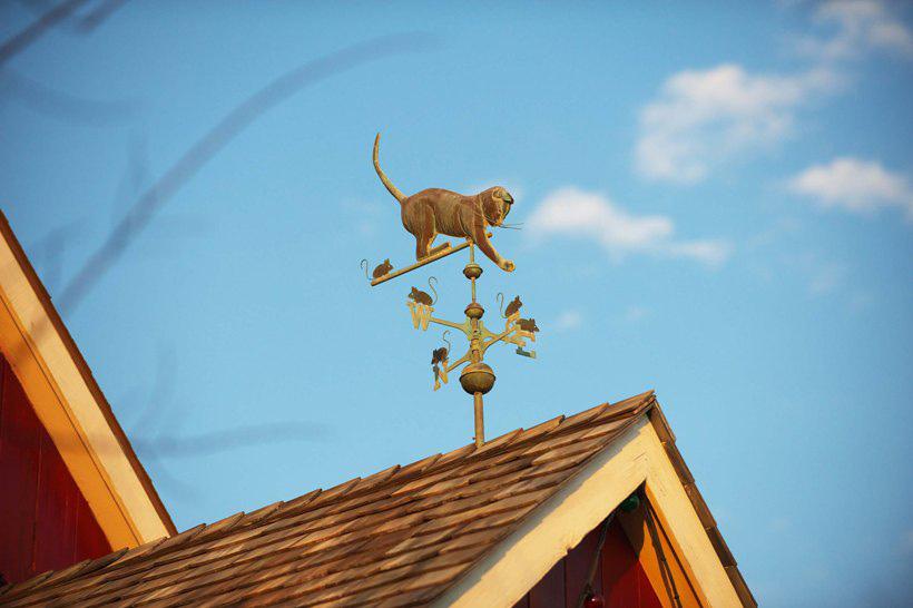 風見ネコの画像