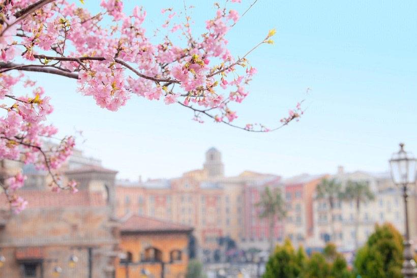 メディテレーニアンハーバーの桜の画像②
