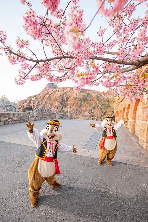 チップとデールが桜を眺めている画像