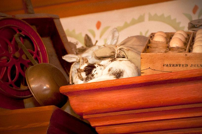 棚の上で寝ているネコ