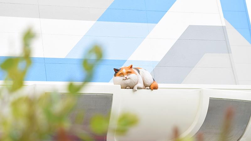 屋根の上で寝ているモチの姿