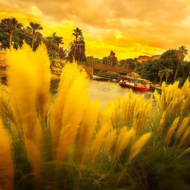 image of Golden autumn黄金色に輝く秋の夕暮れ#disneyseatransitsteamerline #arabiancoast #tokyodisneysea...
