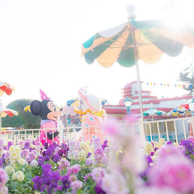image of Girl talk time?女の子はおしゃべりが大好き♪#minnie #daisy #toontown #tokyodisneyland...