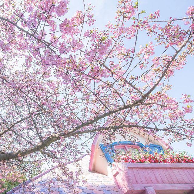 Signs of spring!この花に想いを託して#minnieshouse #toontown #tokyodisneyland #tokyodisneyresort...のイメージ