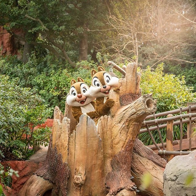 Enjoying hide and seek?いたずらっこ、発見☆#chip #dale #chipanddale #screendebut #crittercountry...のイメージ
