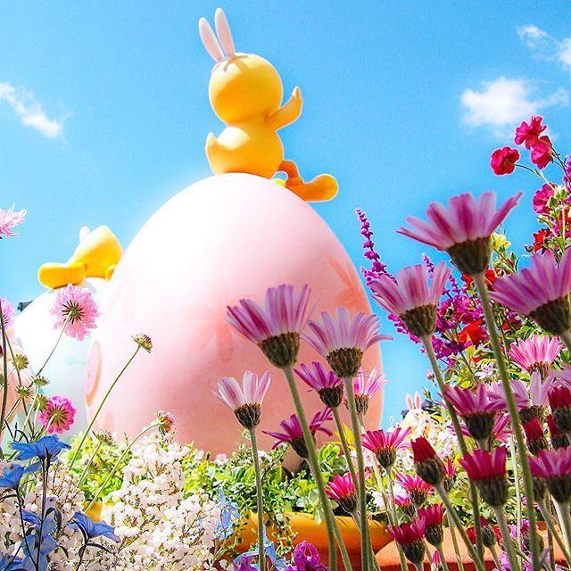 ภาพ Nice to be in the spring sun.青空がきもちいいね♪(Photo:@karinminnie1019rk)#disneyseaster...