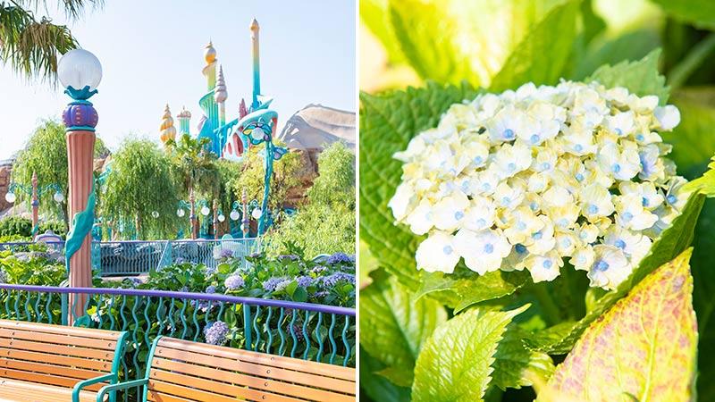 【花と緑の散策】