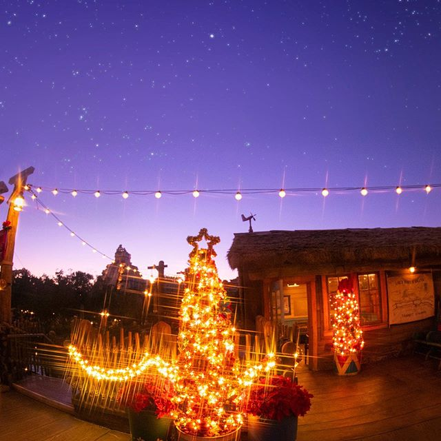 image of Holiday illumination in Lost River Delta.冒険の合間にすてきなクリスマスを…#disneychristmas...