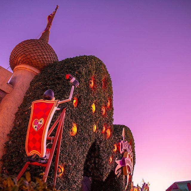 Beautiful red roses.ハートの女王が好きな色?#queenofheartsbanquethall #fantasyland #tokyodisneyland...のイメージ