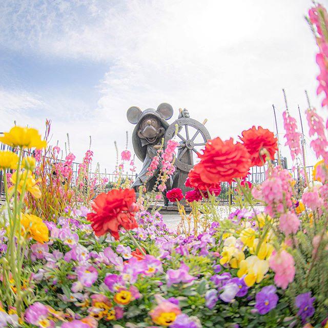 Full of flowers.春いっぱい#capecod #americanwaterfront #tokyodisneysea #tokyodisneyresort...のイメージ