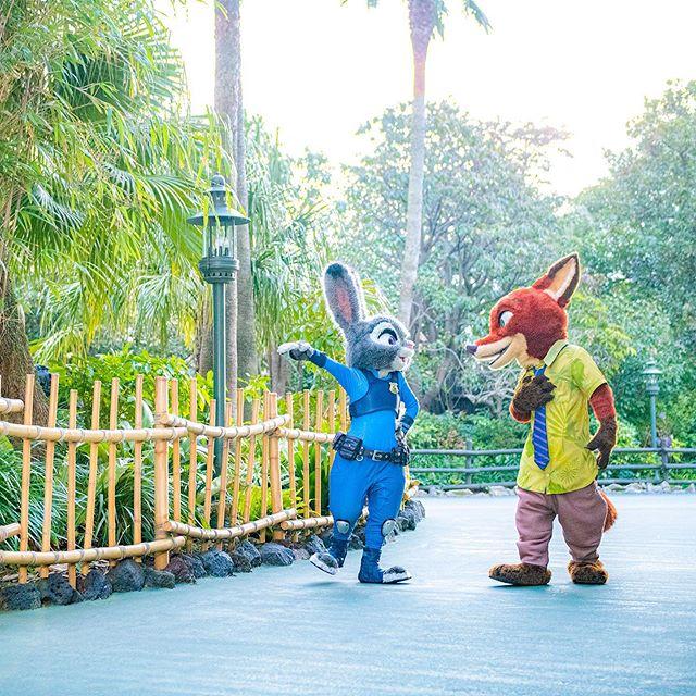 Best buddies!最高のバディ!#judyhopps #nickwilde #zootopia #tokyodisneyland #tokyodisneyresort... 이미지