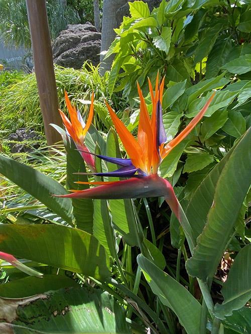 【南国の楽園気分を盛り上げるユニークなお花】...のイメージ