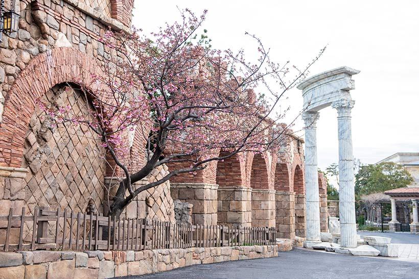 東京ディズニーシーのメディテレーニアンハーバーの河津桜が咲き始めました!パークにはいろいろな場所に桜が植わっているのですが、みなさんご存じですか?>>...のイメージ